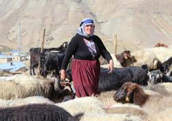 Hakkarili çoban ve berivanlardan barış isteği