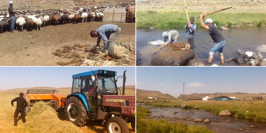 Ağrı'da göçerlerin zorlu yayla hayatı