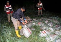 Van'da Kaçak Balık Operasyonu
