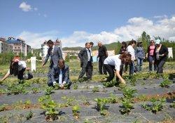Dersim'de Emekler Çileğe Çilekler Reçele Projesi