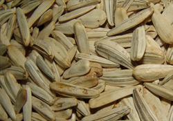 Siloda İşçi 600 Ton Ayçekirdeğinin Altında Kaldı