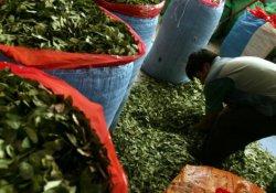 İtalya'da yıllardır 'kokainli çay' satılıyormuş
