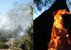 Kış ortasında orman yangını