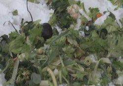 Geyikler için Belgrat Ormanı'na yem bırakıldı