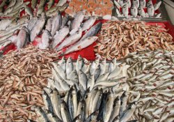 Balık şifa kaynağı