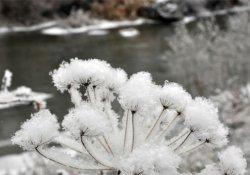 Antalya ve Muğla için don uyarısı