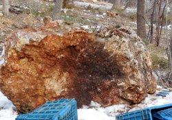 Dağdan kopan 3 tonluk kaya parçası önüne geleni ezdi geçti