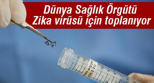 Dünya Sağlık Örgütü Zika virüsü için 'acil' toplanıyor