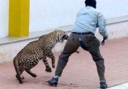 Hindistan'da bir leopar okula girdi, 6 kişiyi yaraladı