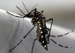 ABD'de 9 hamile kadında Zika virüsü tespit edildi