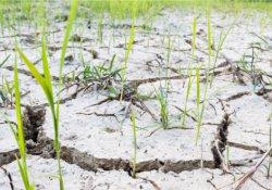 İklim Değişikliği 2050 Yılında Beslenmemizi Nasıl Etkileyecek?