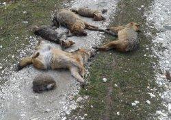Piknik alanında hayvan katliamı