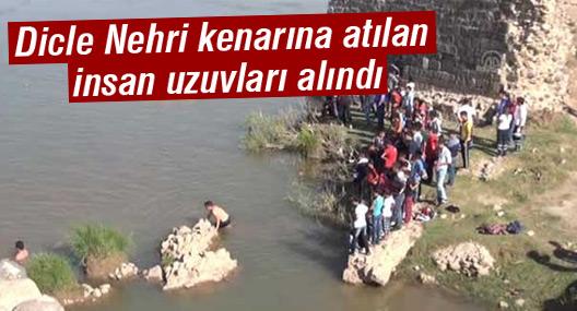 Dicle Nehri kenarına atılan insan uzuvları alındı