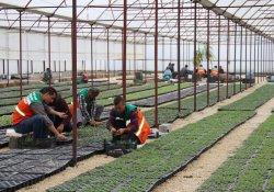 Halka ücretsiz 100 bin yerli sebze fidesi dağıtılacak