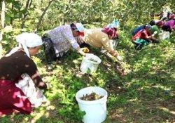 HDP kadın işçilerin istihdamı için Meclis Araştırması istedi