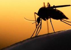 Avrupa'ya Zika virüsü uyarısı