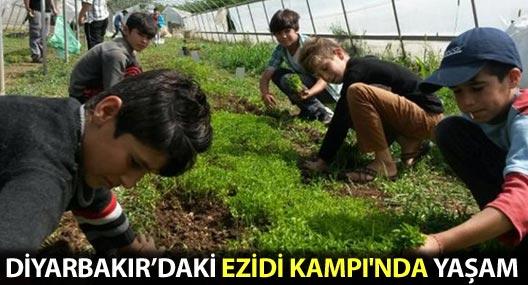 Diyarbakır'daki Ezidi Kampı'nda yaşam
