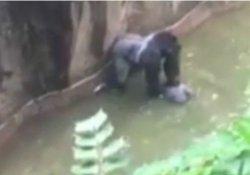 'Gorilin öldürüldüğü olayda annenin suçu yok'