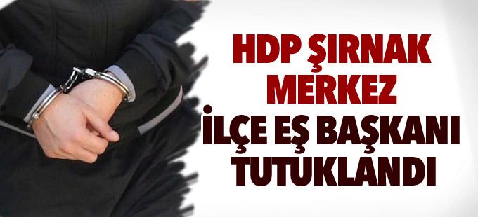 HDP Şırnak Merkez İlçe Eş Başkanı Yiğit tutuklandı