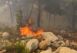 Çay demledi, 100 dönümlük kızılçam ormanını yaktı