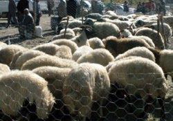 Hakkari'de kurban satış ve kesim yerleri belirlendi
