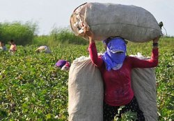 Sekiz ayda 70 kadın işçi hayatını kaybetti