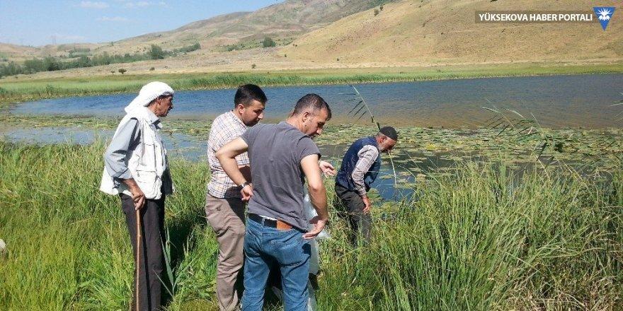 Bingöl'de göletlere 20 bin yavru sazan bırakıldı