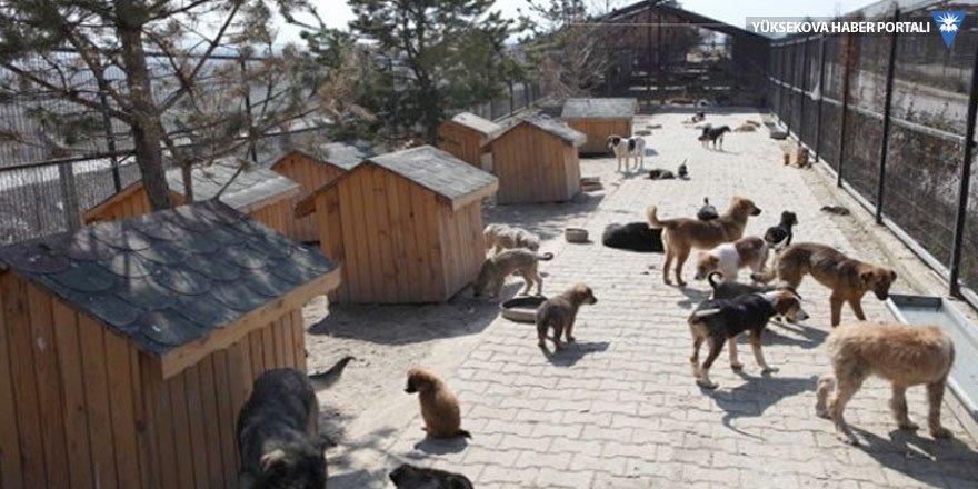 Hayvan dernekleri hayvanlar için dövüştü
