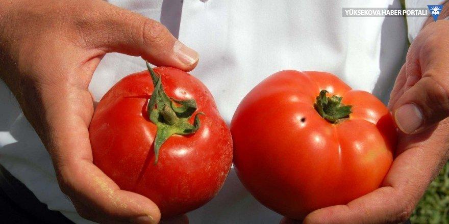 Rusya'dan domatese sınırlı izin çıktı