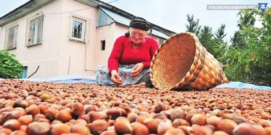 Üreticiden 10 liraya alınan fındığın kilosu, rafta 60 lira