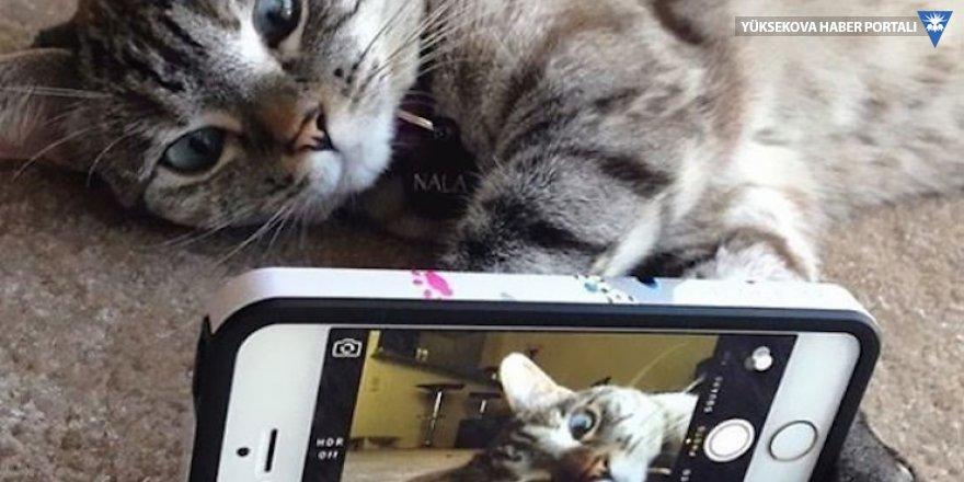 Harvard araştırması: Instagram paylaşımları hakkınızda ne söylüyor