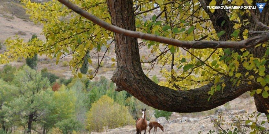 Kars'ta sonbaharda renk cümbüşü