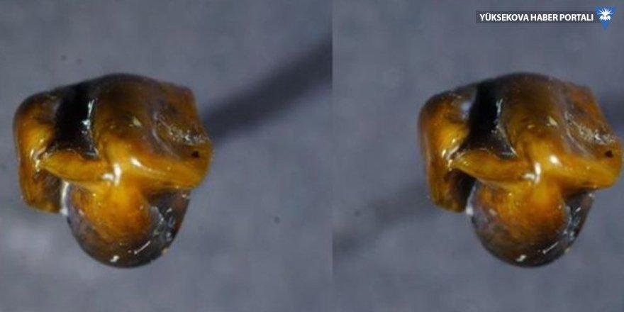 İnsanlık tarihini değiştirecek iki diş bulundu
