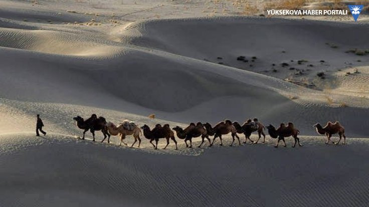 1700 yıllık Çin mucizesi: Çölü çiftliğe çevirdiler
