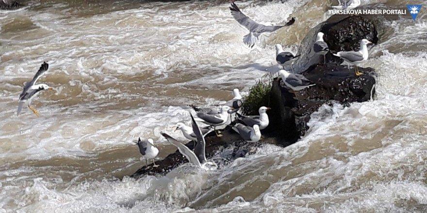 Uçan balıkların göçü devam ediyor