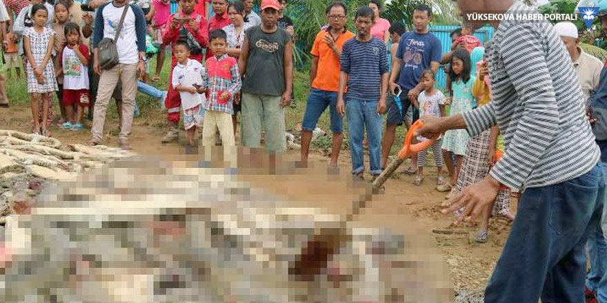 'İntikam' için 300 timsahı katlettiler