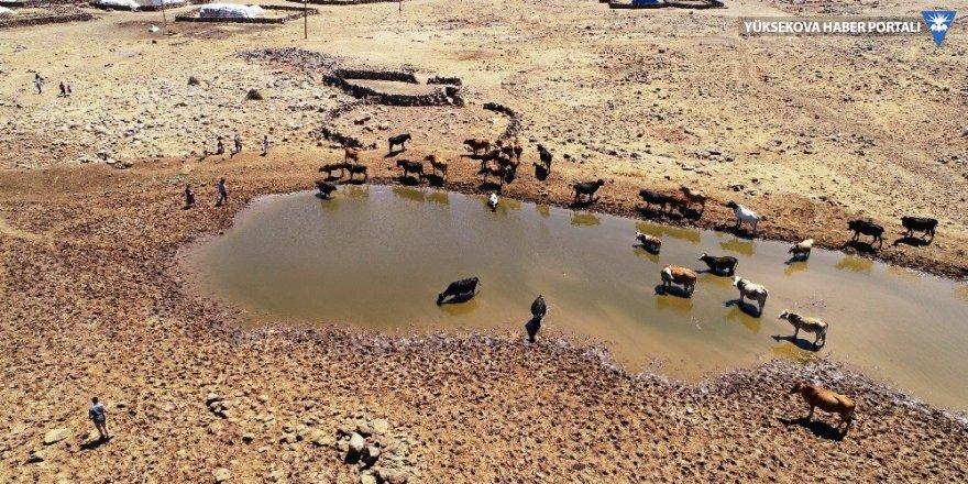 Susuzluktan 40 bine yakın hayvanla göç ettiler