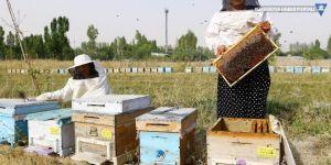 Vanlı kadın arıcılardan bal hasadı