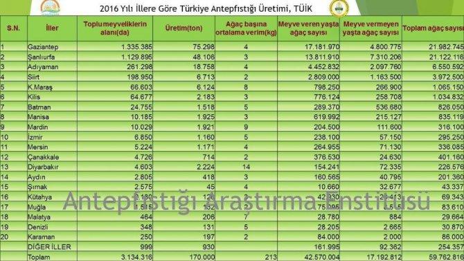 Antep fıstığını en çok yetiştiren il Gaziantep, en verimli yer Diyarbakır