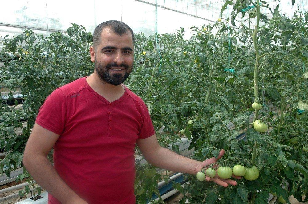 Vanlı domates üreticisi eğitim serası kurdu