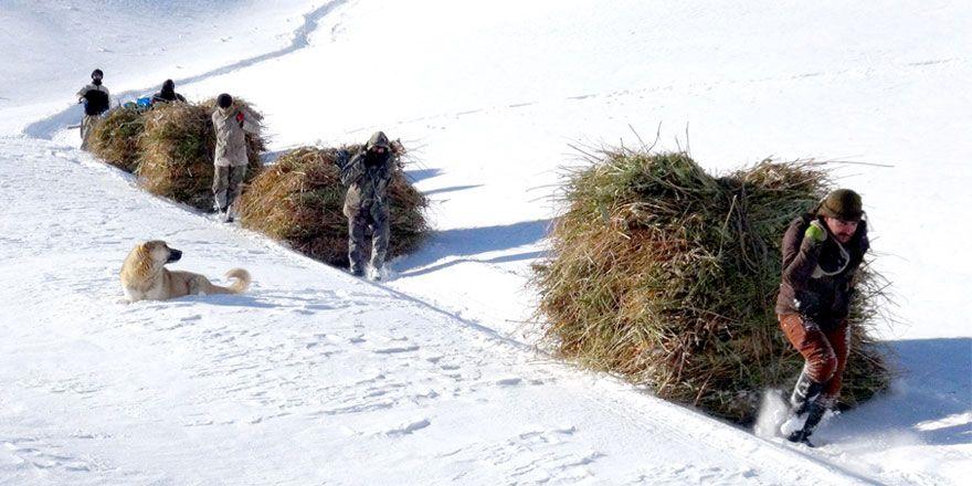 Yüksekova'da çiftçilerin kış çilesi